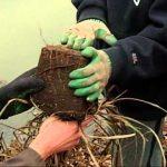 Native Gardening with Kids – 2005