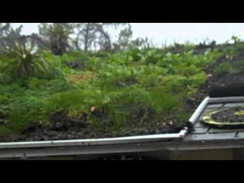 Sloped, Extensive Green Roof Cleans Stormwater