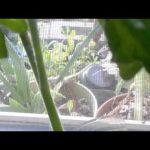 Urban Gardening Benefits