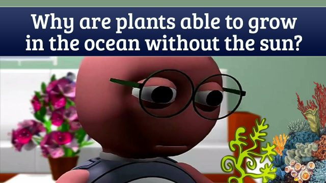 How Plants Grow Under Water? – Amazing Facts About Ocean