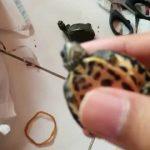 Unboxing 2 Pangshura Tecta Turtle