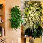 Wall Hanging Plants