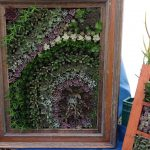 Succulents in an old picture frame.