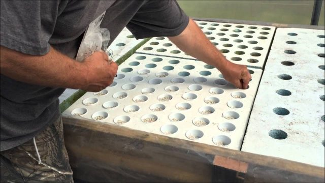 Planting Onion & Garlic In A Hydroponic Floating Raft Bed