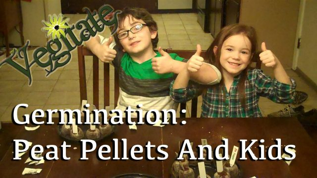 How To Germinate Seeds In Peat Pellets