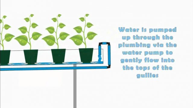 Hydroponic – NFT systems basic run down (Nutrient Film Technique)