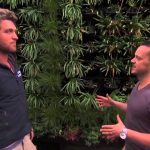 Vertical Garden & Green Wall System – Gro Wall® 4 featured on Healthy Homes Australia