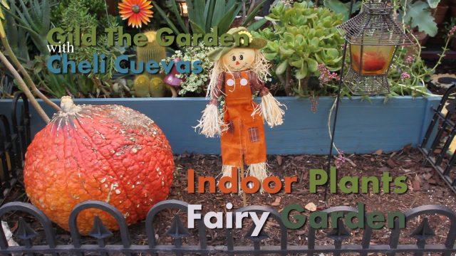 Gardening Indoors! The benefits of Indoor Plants + How to make an Indoor Fairy Garden!