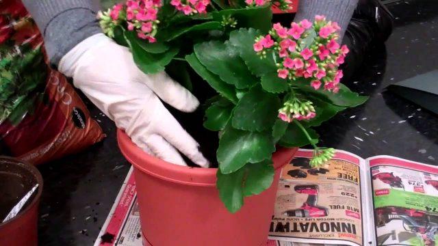 How to Make a Lattice Vertical Garden – The Home Depot