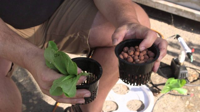 How to Transfer Planted Plants to a Hydroponic System : Hooked on 'Ponics