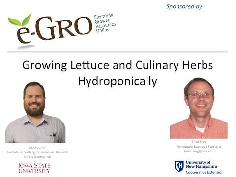 e-GRO Webinar – Growing Lettuce and Culinary Herbs Hydroponically