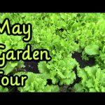 Backyard Vegetable Garden Update May 2016