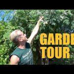 Arizona Garden Tour – Over 200 Fruit Trees on 1/3 Acre – Spring 2016