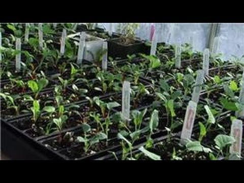 Indoor Gardening Tips : How Do I Grow Herbs Inside by Seed?