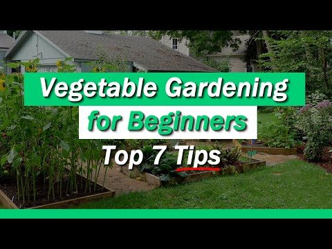 Vegetable Gardening for Beginners – 7 Tips You Must Know