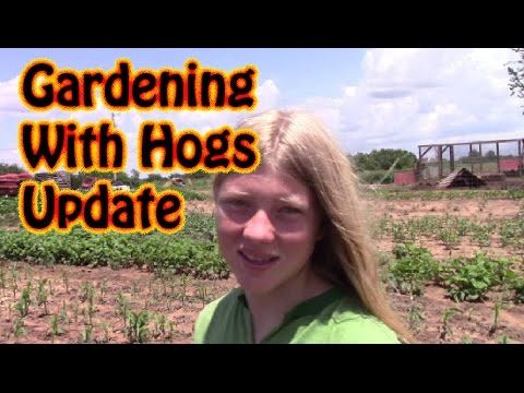 "Result of ""Pigs in the Garden"" Update  June 5,2016 