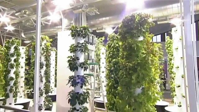 Future Growing® Tower Garden® Farm At O'Hare International Airport
