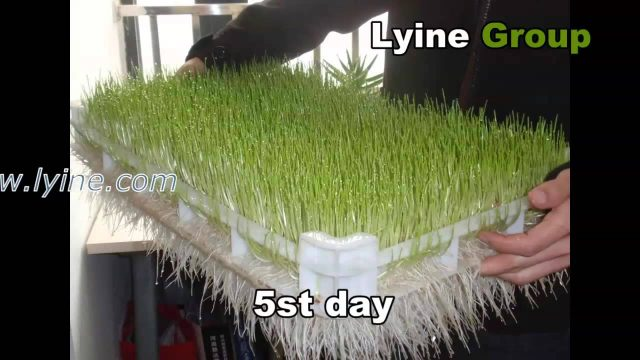 Lyine Brand hydroponic system fodder sprout machine for livestock/animal/cattle/horse/goat/poultry