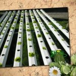 Disadvantages Of A Soil Garden | Hydroponics Halifax