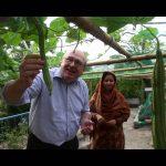FAO Bangladesh Roof-Top Garden