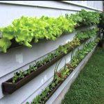 Northwest Gardening: Vertical gardens for urban spaces