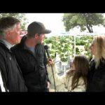 Hydroponics Growing System at Strawberry Farm
