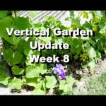 Vertical Gardening – DIY Cucumber Trellis – Week 8