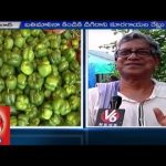 Roof Gardening   Special Focus on Vegetable Gardening on top of Roof   Hyderabad – V6 News