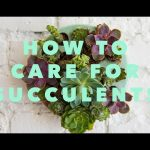 How to care for succulents & make a succulent wall planter