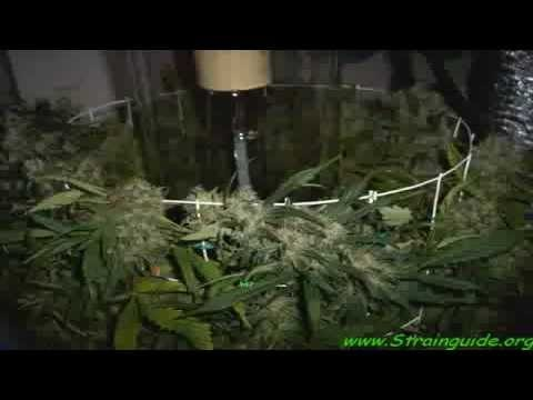 Grow Vertical – Harvest More with Controlled Vertical Production