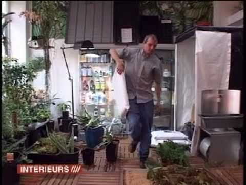 How to make a urban garden ? Ideas  for plant wall, indoor garden and terrace