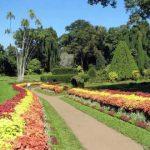 Good garden ideas