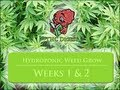 Growing Weed with a Hydro System – Germination and Weeks 1 & 2