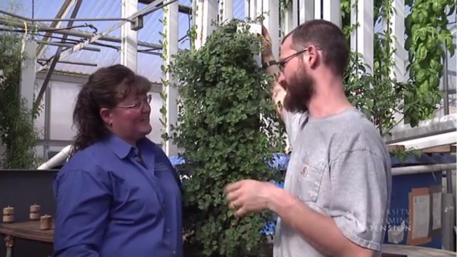 Discover Vertical Gardening Made Easy For Beginners DIY