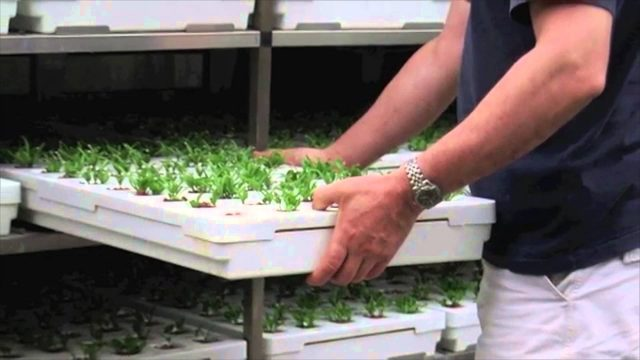 Introducing Vertical Farm Systems