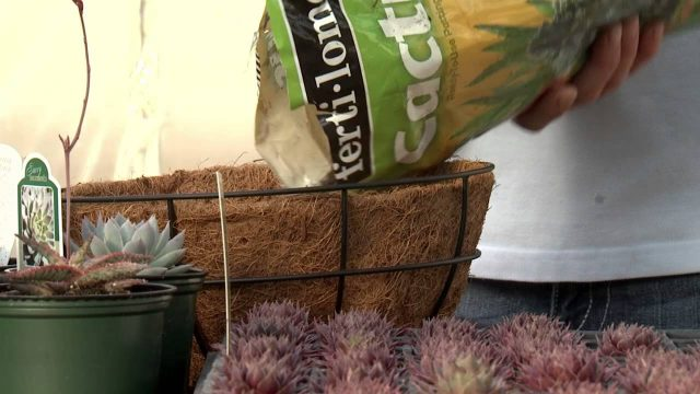 Sedum Spheres, Southern Gardening TV, March 2, 2014