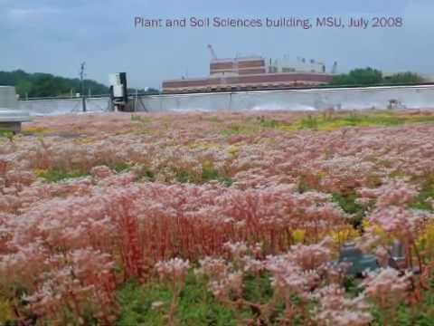 Green roof research at Michigan State University