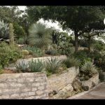 Outstanding Succulent Design  Jeff Pavlat  Central Texas Gardener