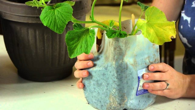 Information on Growing a Garden for Elementary Kids : Crafts & Activities for Kids