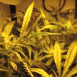 Stealth Grow Box SuperCloset SuperLocker Hydroponic Grow Box Medicinal Marijuana Weed Grow Cabinet
