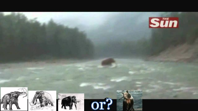 Woolly Mammoth found Alive Crossing a river in Siberia: Still not extinct?