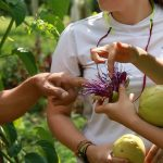 ISDSI Experiential Learning: Mae Ta Sustainable Agriculture