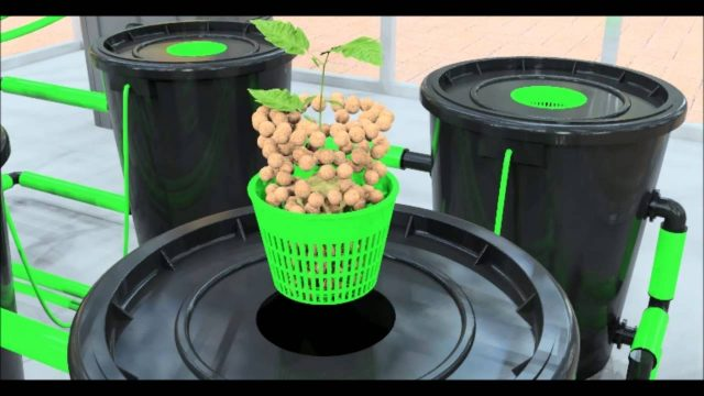 Alien® RDWC hydroponic system operation video dwc