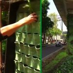 Mexico City raises green awareness with vertical gardens