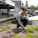 Humus rooftop garden – Urban Gardener video