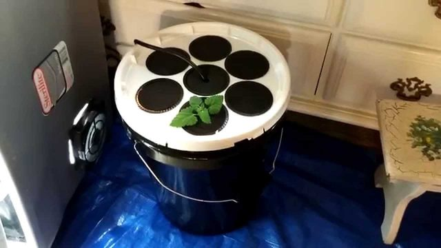 Easiest DIY Aeroponics Cloner Ever! (No PVC)