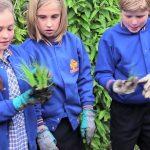 Join the Kitchen Garden Classroom!
