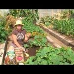 Vegetable Gardening : How to Plant Zucchini in a Garden