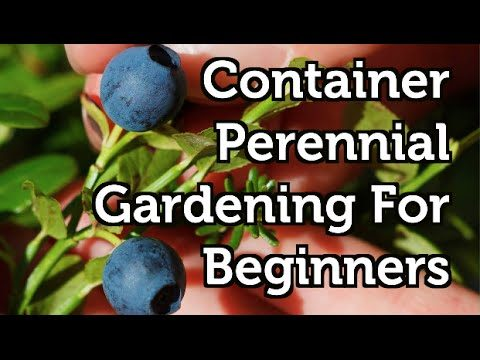 Container Gardening For Beginners — Perennial Fruits