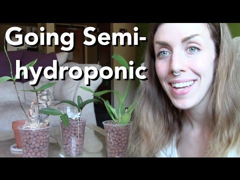 Going Semi-Hydroponic with Orchids – 3 plants demonstrated